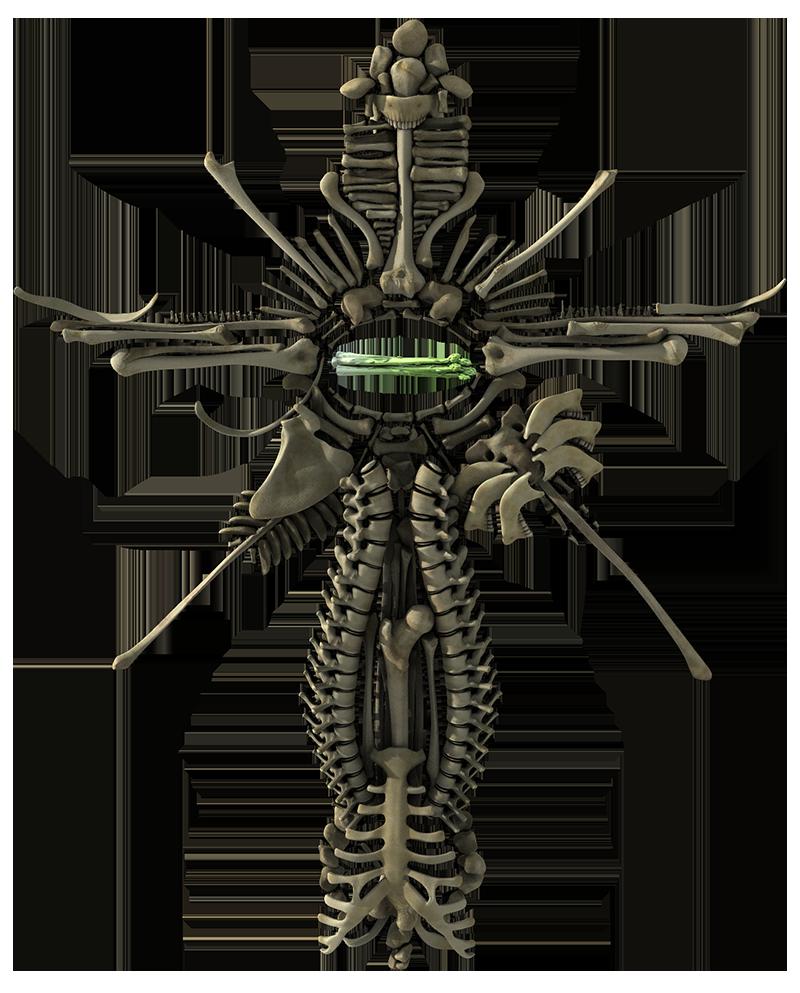 asparagus ossuary__